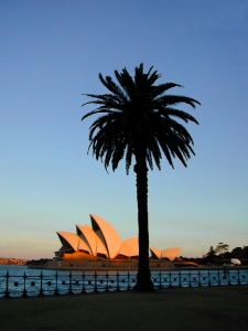 Sydney Australian expat palm tree and Harbor